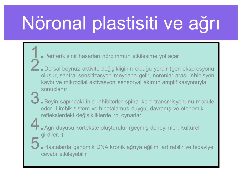 Nöronal plastisiti ve ağrı