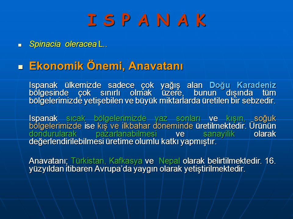 I S P A N A K Ekonomik Önemi, Anavatanı Spinacia oleracea L..