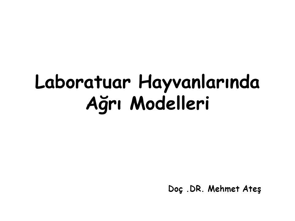 Laboratuar Hayvanlarında Ağrı Modelleri