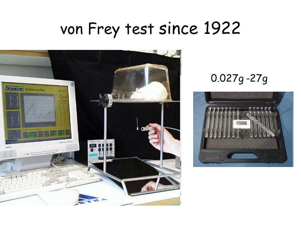 von Frey test since 1922 0.027g -27g