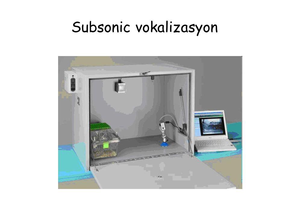 Subsonic vokalizasyon