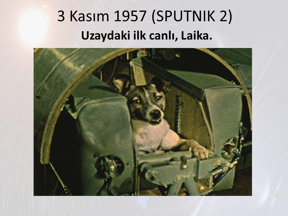 Uzaydaki ilk canlı, Laika.