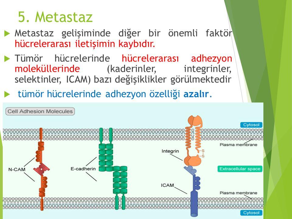 5. Metastaz Metastaz gelişiminde diğer bir önemli faktör hücrelerarası iletişimin kaybıdır.