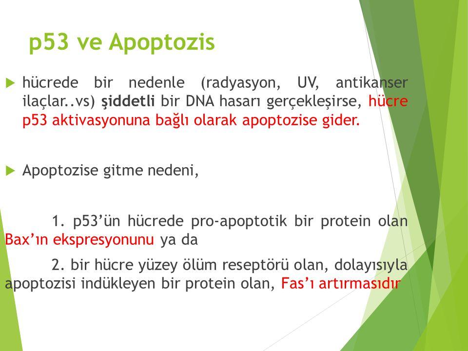 p53 ve Apoptozis
