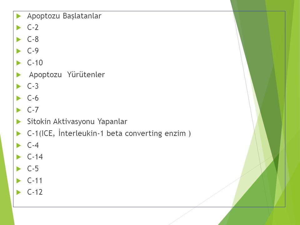 Apoptozu Başlatanlar C-2. C-8. C-9. C-10. Apoptozu Yürütenler. C-3. C-6. C-7. Sitokin Aktivasyonu Yapanlar.