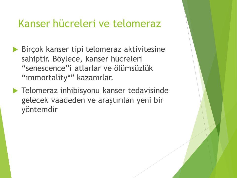 Kanser hücreleri ve telomeraz