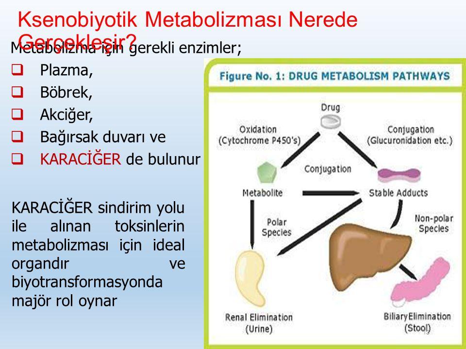 Ksenobiyotik Metabolizması Nerede Gerçekleşir