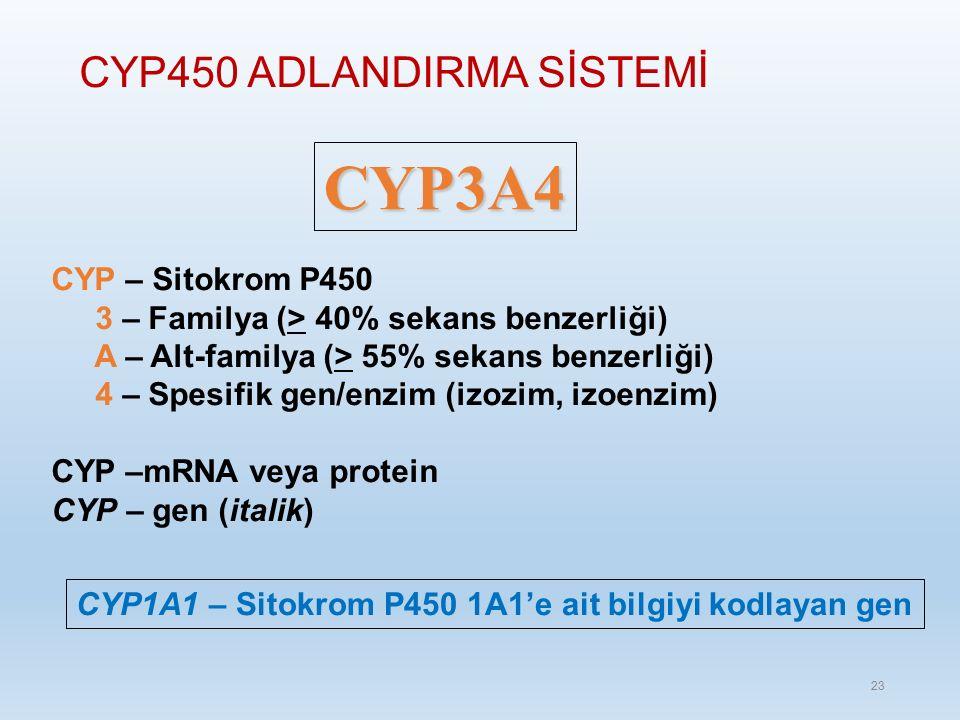 CYP450 ADLANDIRMA SİSTEMİ