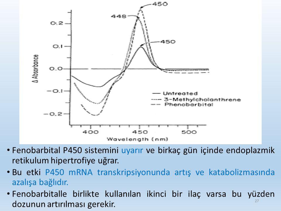 Fenobarbital P450 sistemini uyarır ve birkaç gün içinde endoplazmik retikulum hipertrofiye uğrar.