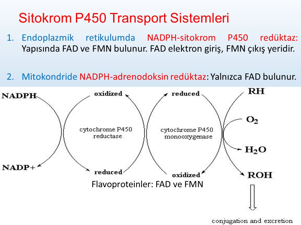 Sitokrom P450 Transport Sistemleri
