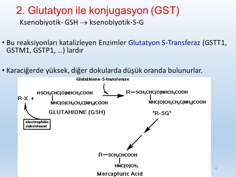 2. Glutatyon ile konjugasyon (GST)