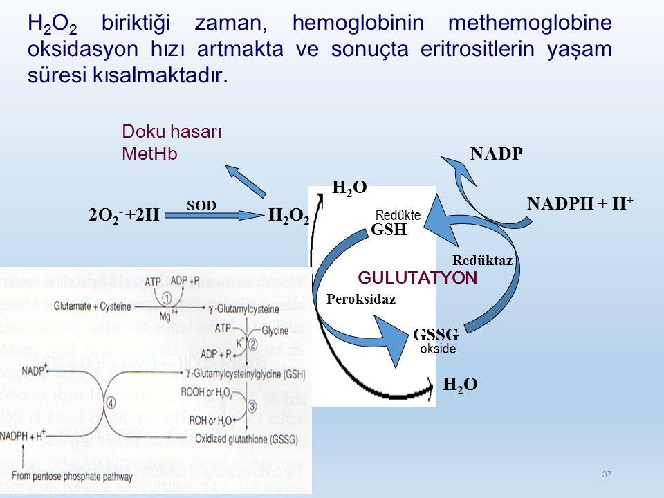 H2O2 biriktiği zaman, hemoglobinin methemoglobine oksidasyon hızı artmakta ve sonuçta eritrositlerin yaşam süresi kısalmaktadır.
