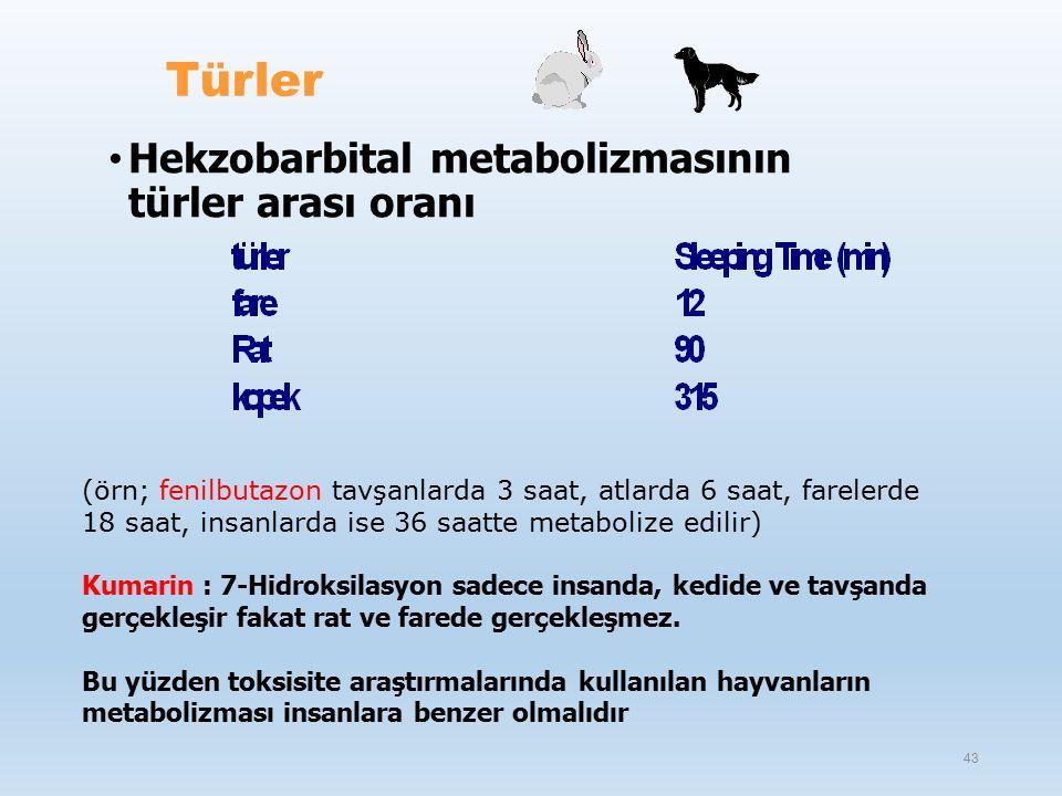 Türler Hekzobarbital metabolizmasının türler arası oranı