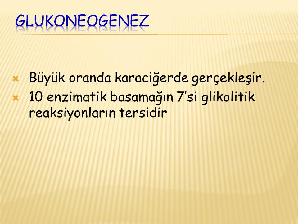 GluKoneogenez Büyük oranda karaciğerde gerçekleşir.