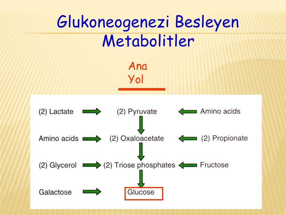 Glukoneogenezi Besleyen Metabolitler