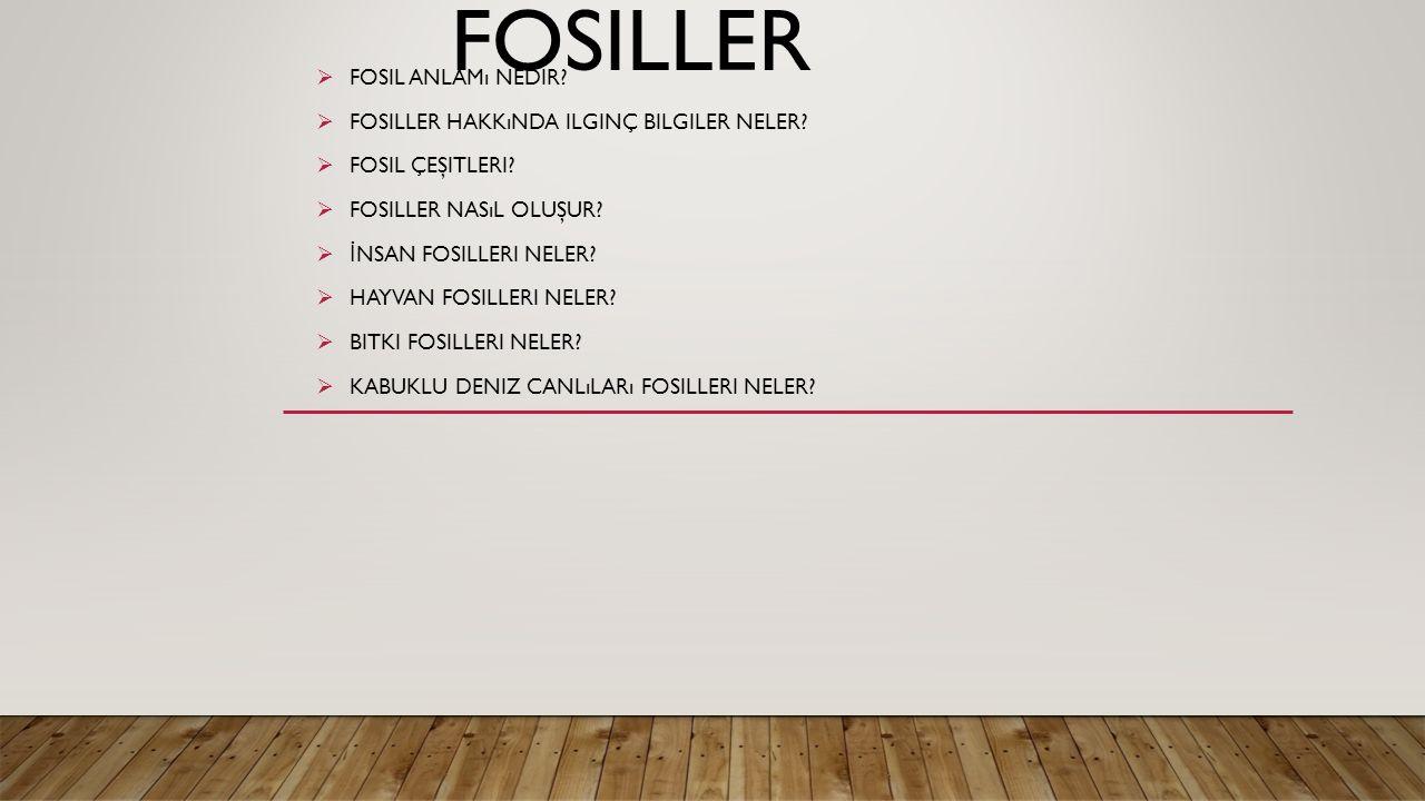 fosiller Fosil anlamı nedir Fosiller hakkında ilginç bilgiler neler