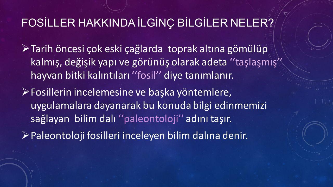 FOSİLLER HAKKINDA İLGİNÇ BİLGİLER NELER
