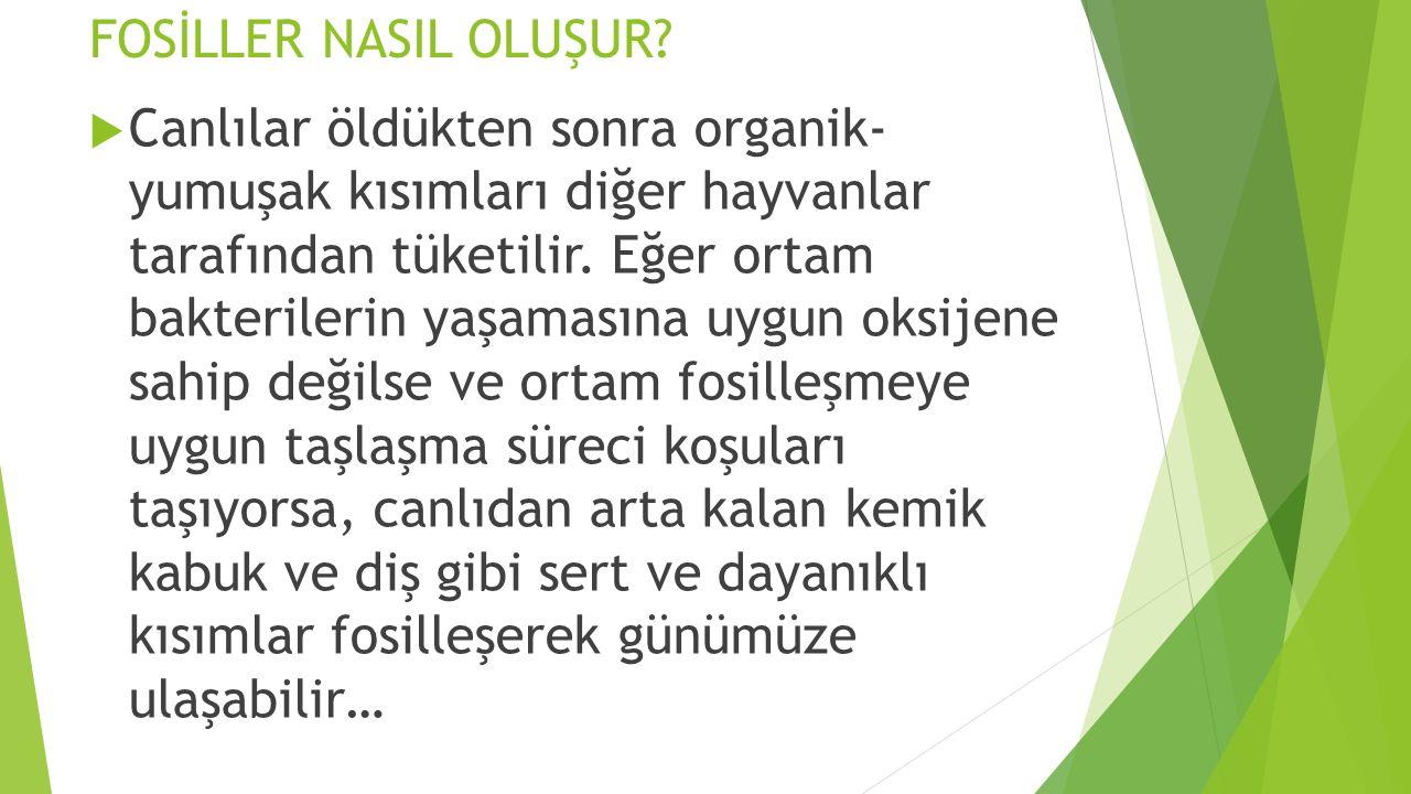 FOSİLLER NASIL OLUŞUR