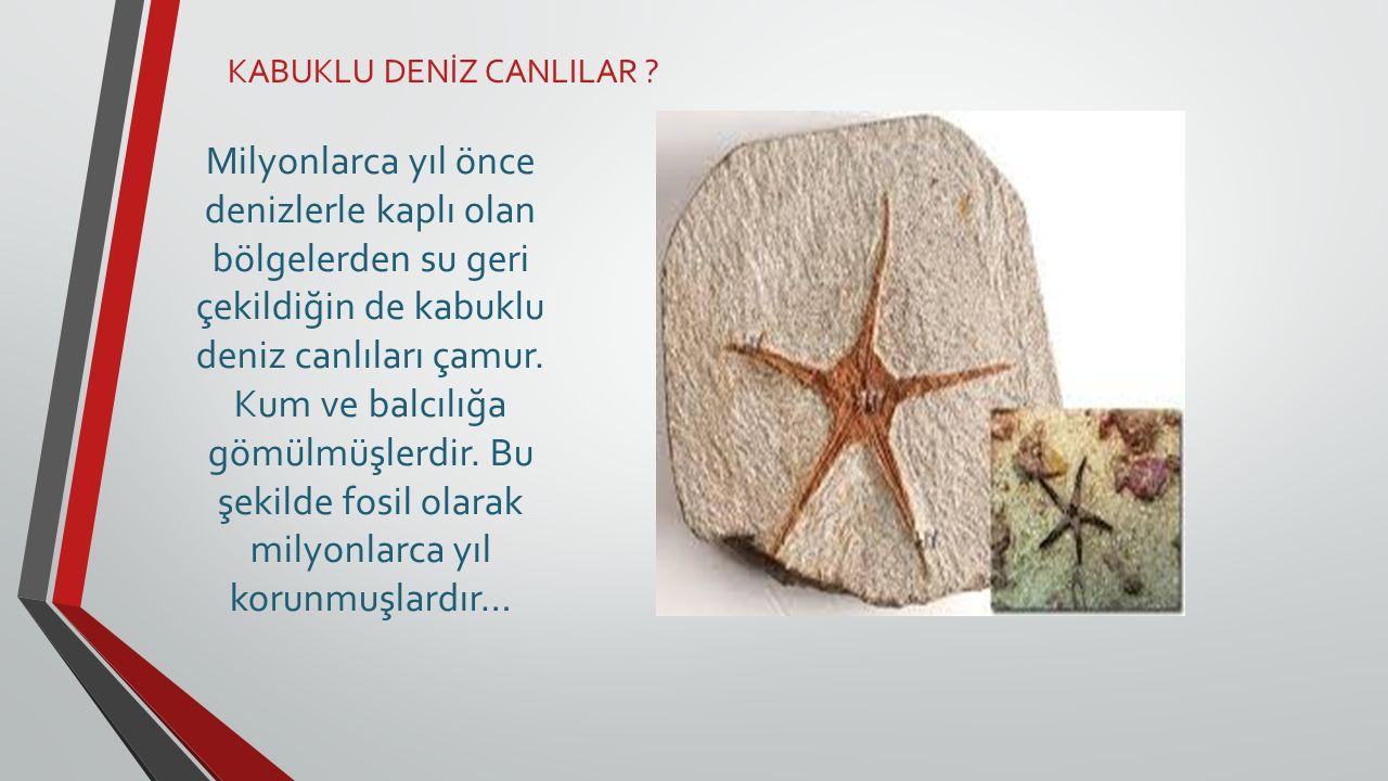 KABUKLU DENİZ CANLILAR