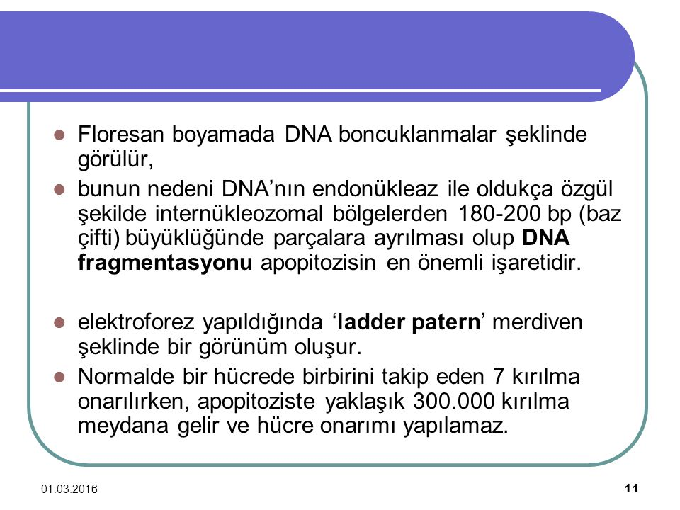 Floresan boyamada DNA boncuklanmalar şeklinde görülür,