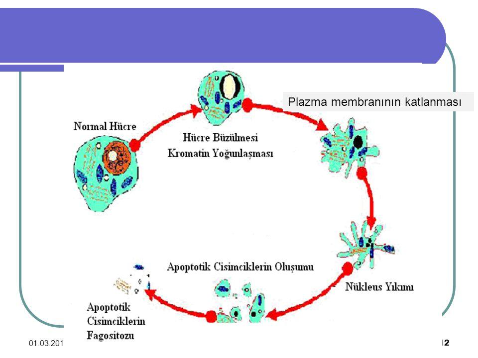 Plazma membranının katlanması