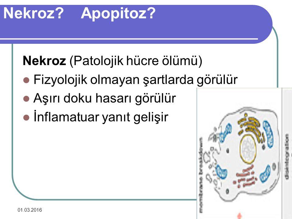 Nekroz Apopitoz Nekroz (Patolojik hücre ölümü)