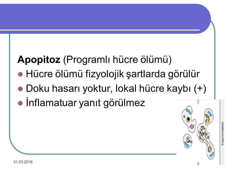 Apopitoz (Programlı hücre ölümü)