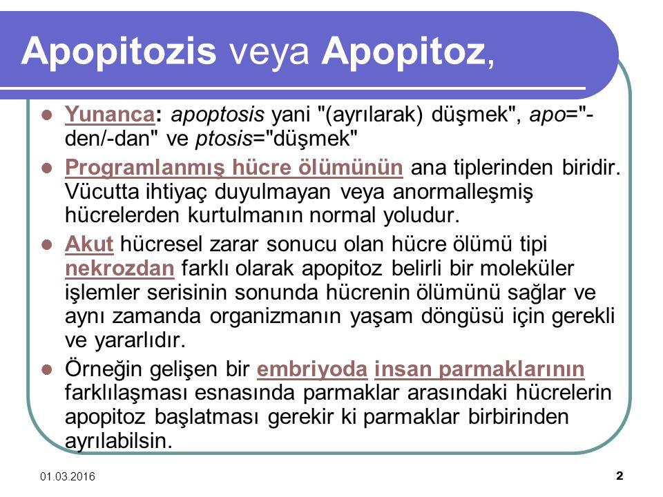 Apopitozis veya Apopitoz,