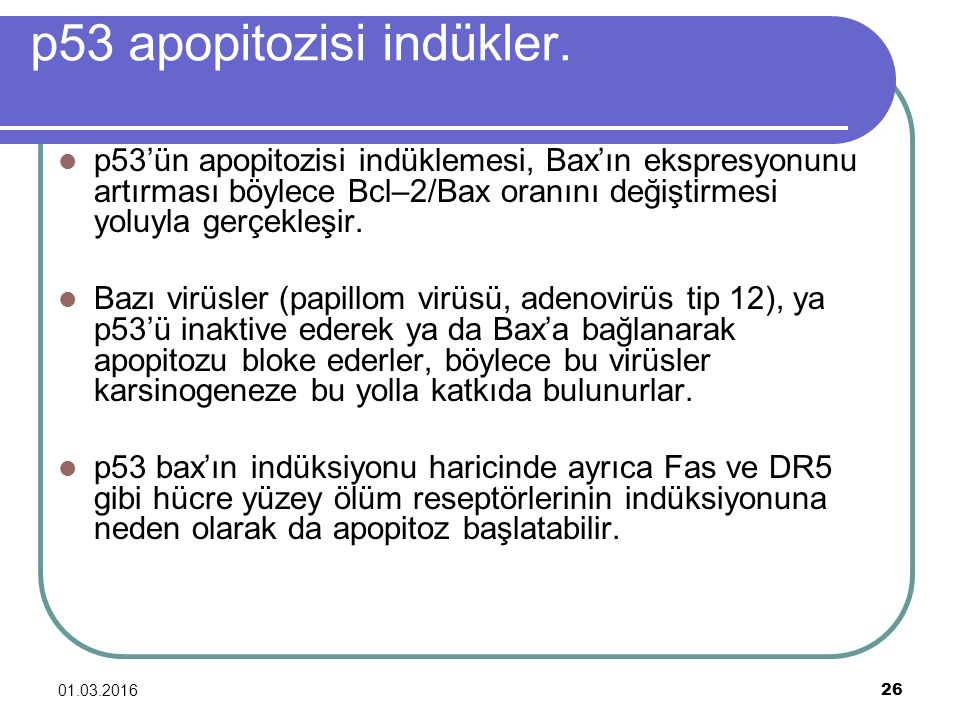 p53 apopitozisi indükler.