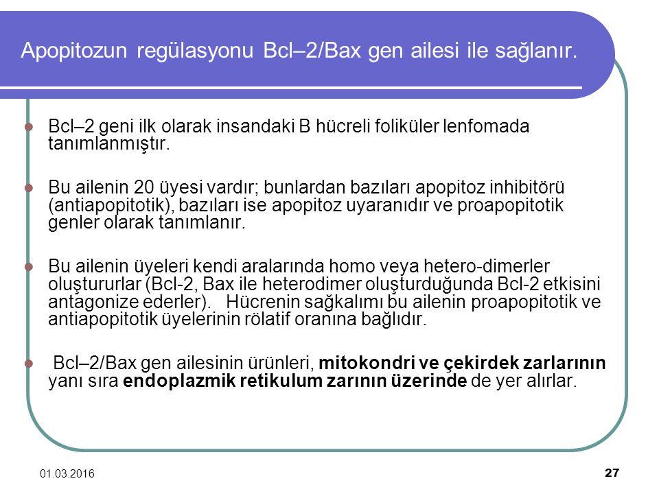 Apopitozun regülasyonu Bcl–2/Bax gen ailesi ile sağlanır.