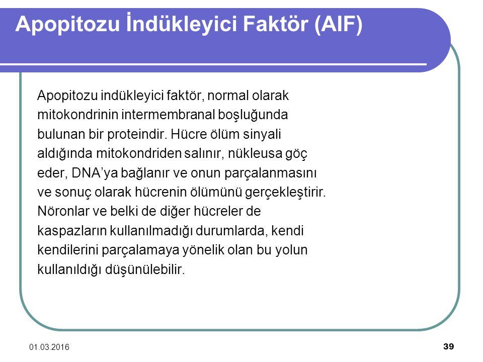 Apopitozu İndükleyici Faktör (AIF)