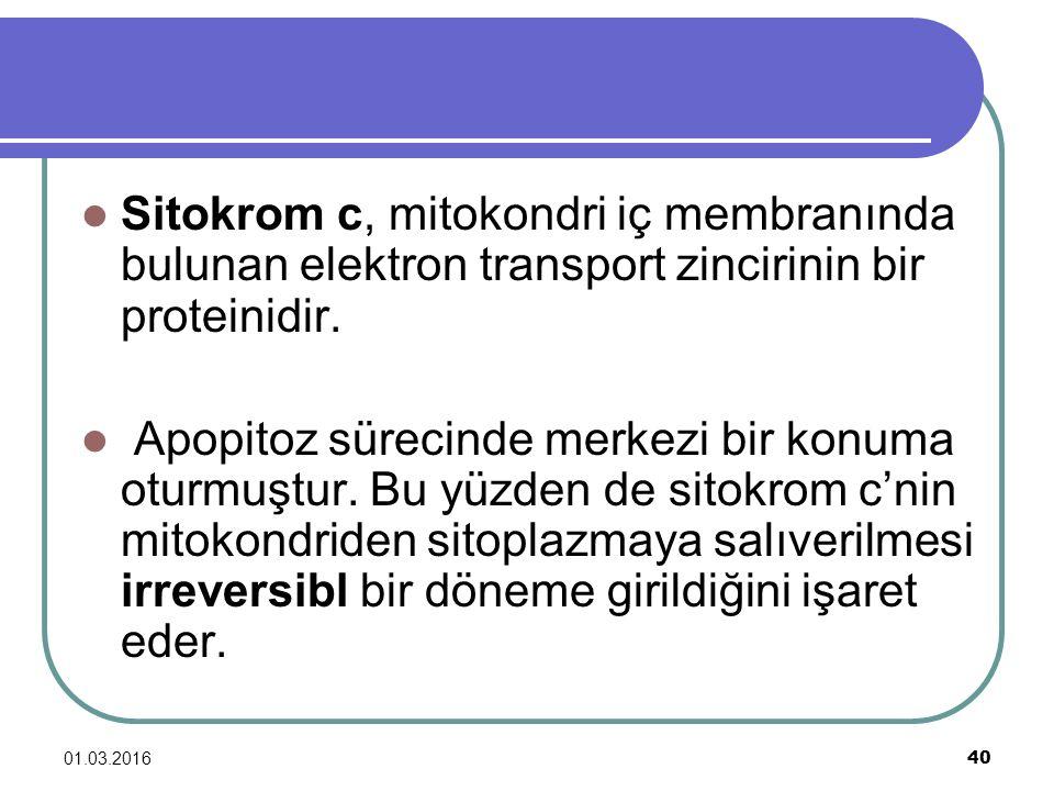 Sitokrom c, mitokondri iç membranında bulunan elektron transport zincirinin bir proteinidir.