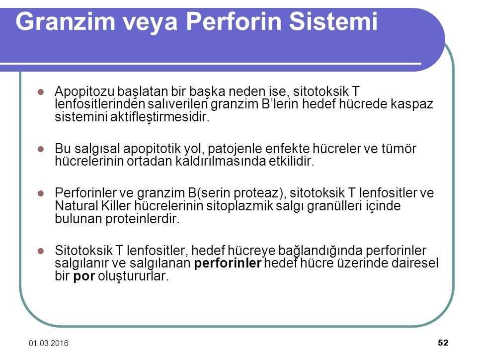 Granzim veya Perforin Sistemi