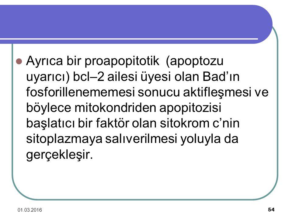 Ayrıca bir proapopitotik (apoptozu uyarıcı) bcl–2 ailesi üyesi olan Bad'ın fosforillenememesi sonucu aktifleşmesi ve böylece mitokondriden apopitozisi başlatıcı bir faktör olan sitokrom c'nin sitoplazmaya salıverilmesi yoluyla da gerçekleşir.