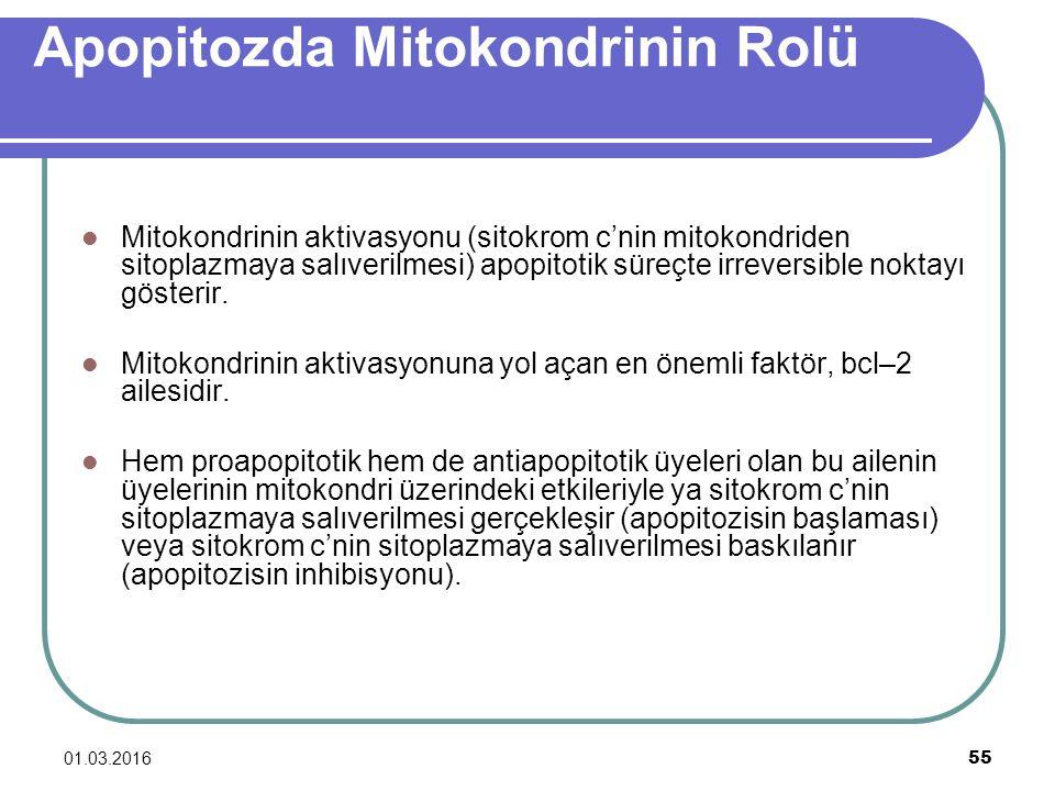 Apopitozda Mitokondrinin Rolü