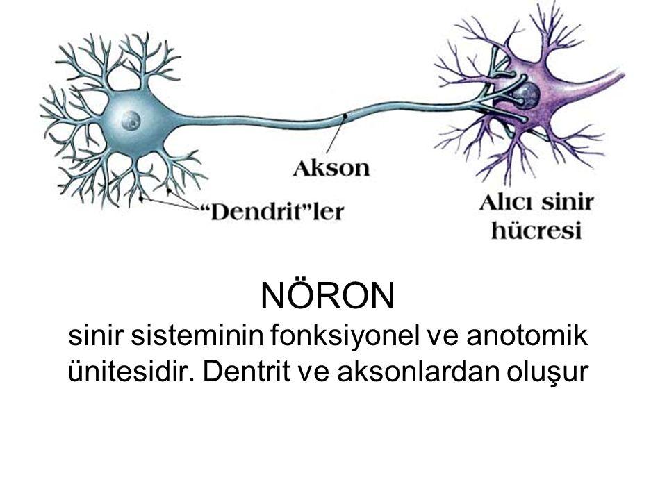 NÖRON sinir sisteminin fonksiyonel ve anotomik ünitesidir