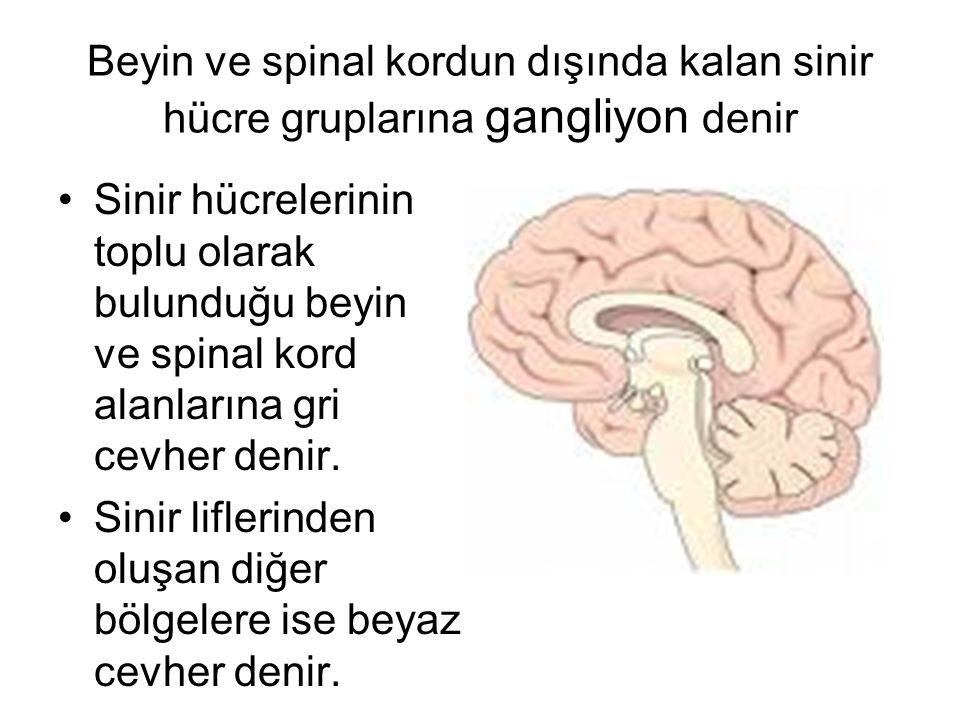 Beyin ve spinal kordun dışında kalan sinir hücre gruplarına gangliyon denir