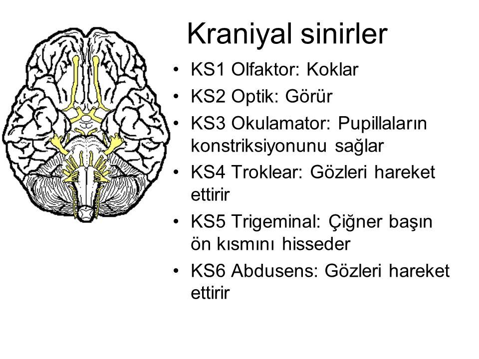 Kraniyal sinirler KS1 Olfaktor: Koklar KS2 Optik: Görür