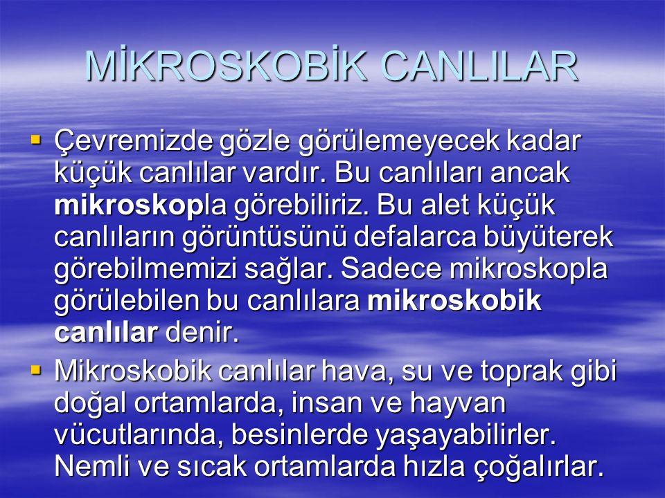 MİKROSKOBİK CANLILAR