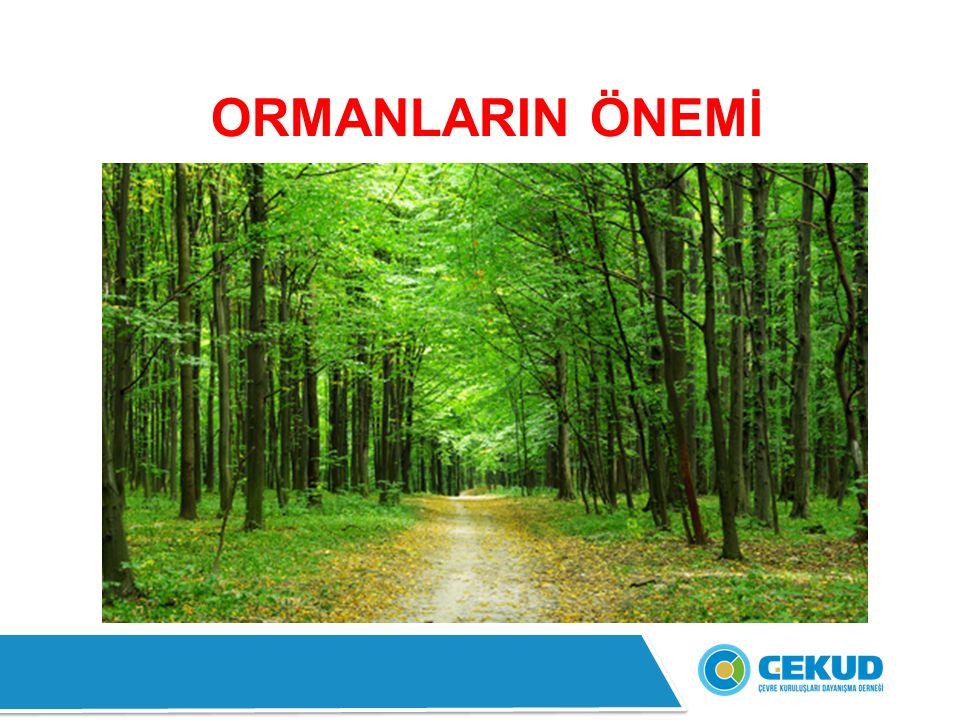 ORMANLARIN ÖNEMİ