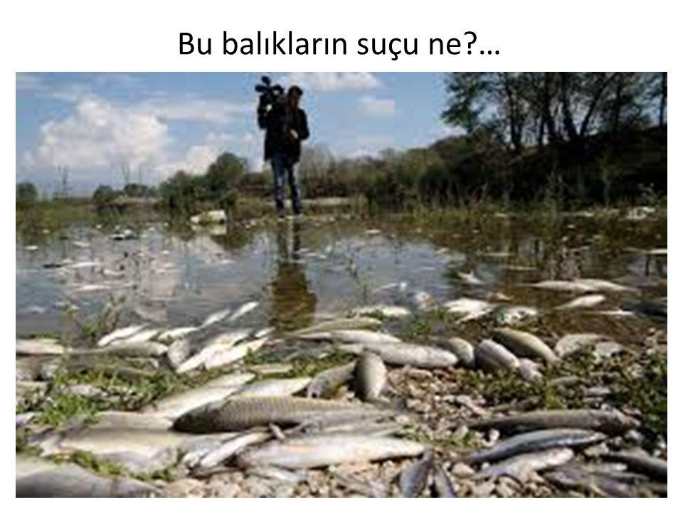 Bu balıkların suçu ne …