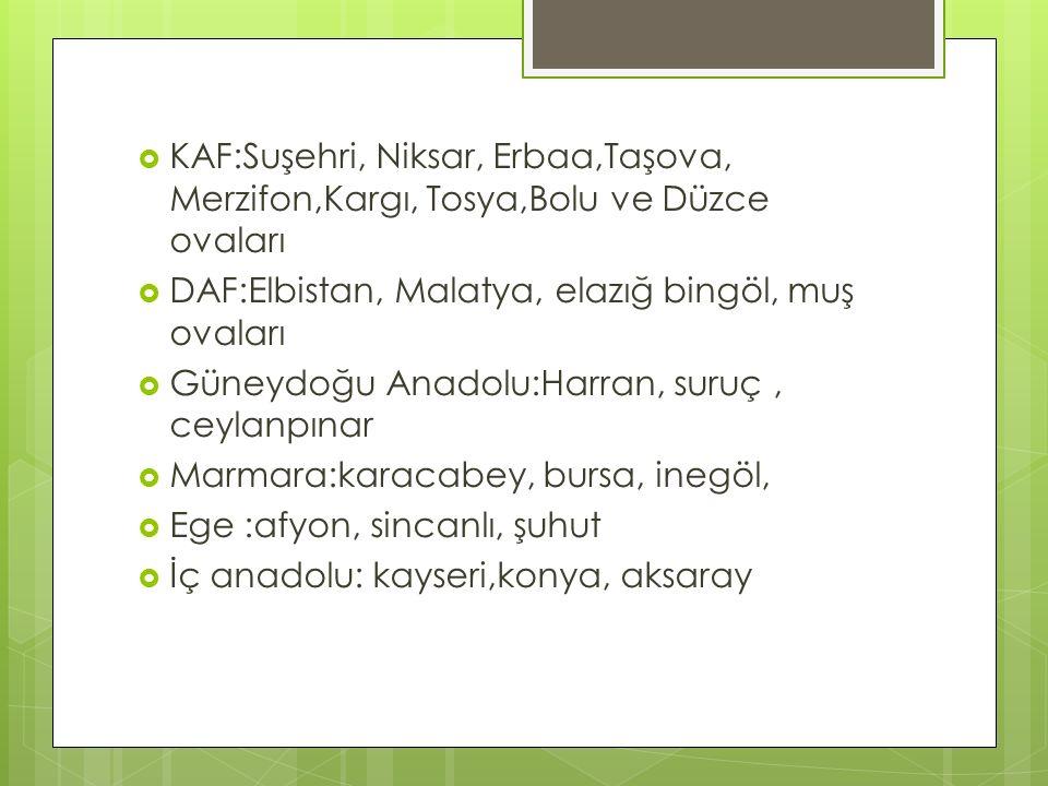KAF:Suşehri, Niksar, Erbaa,Taşova, Merzifon,Kargı, Tosya,Bolu ve Düzce ovaları