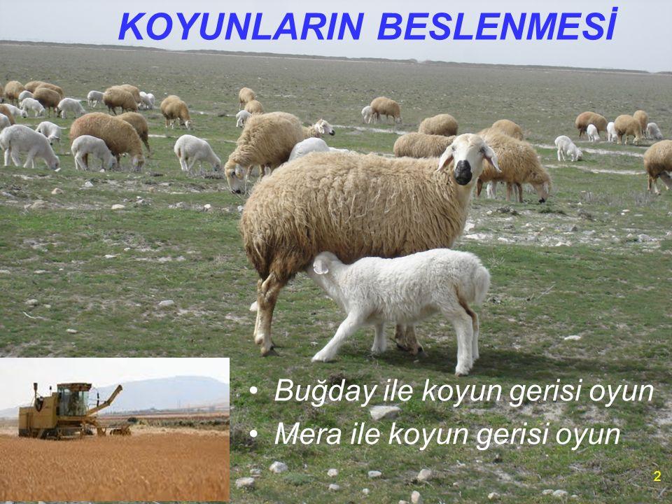KOYUNLARIN BESLENMESİ