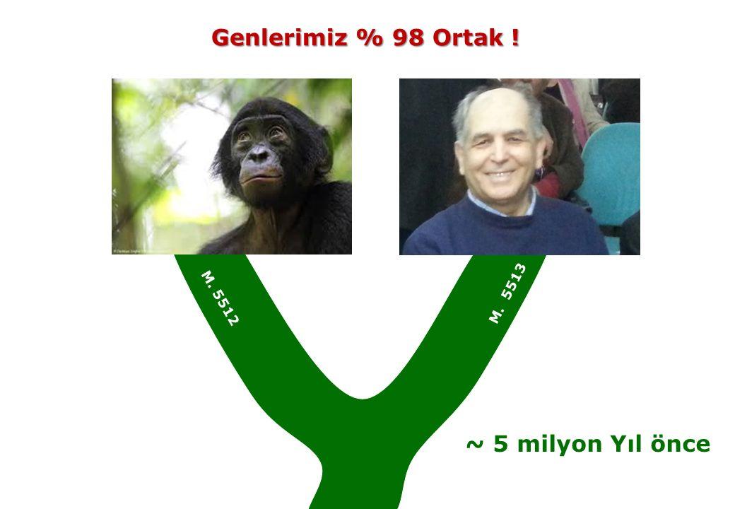 Genlerimiz % 98 Ortak ! M. 5513 M. 5512 ~ 5 milyon Yıl önce
