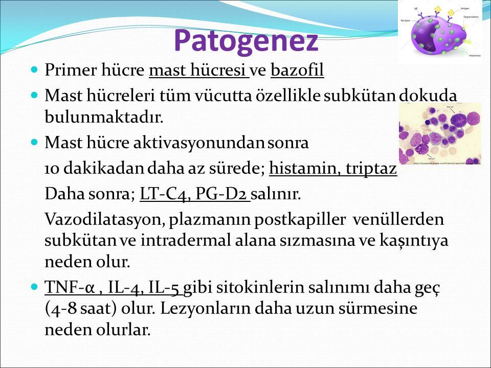 Patogenez Primer hücre mast hücresi ve bazofil