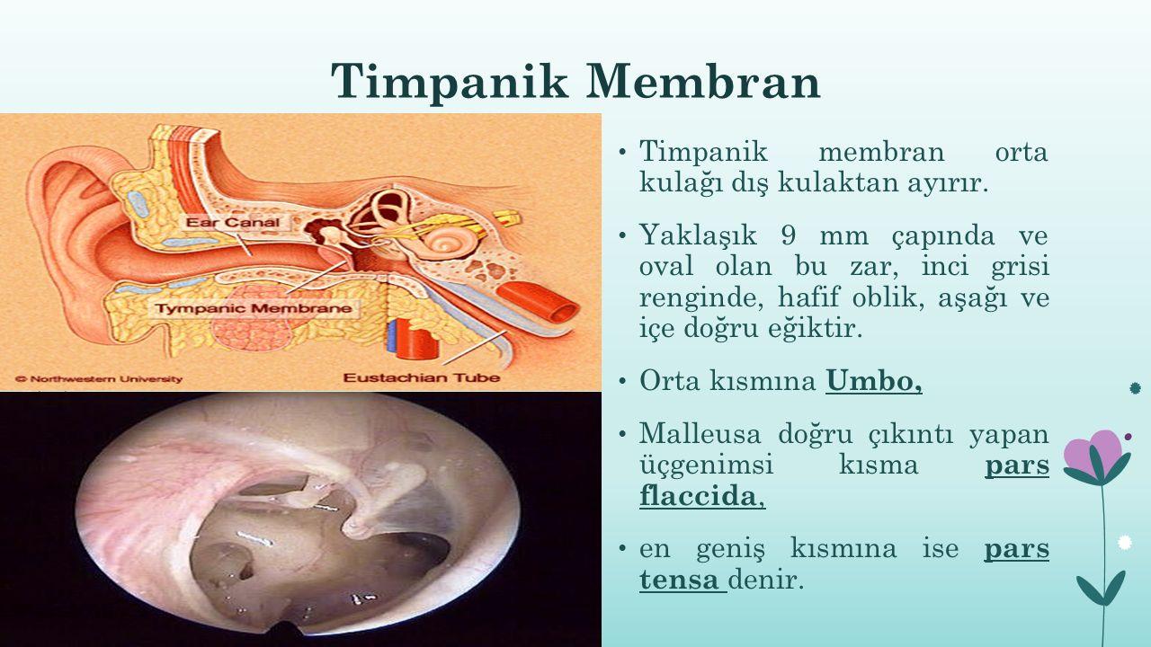 Kulak dış, orta ve iç bölgelerinde otitis belirtisi