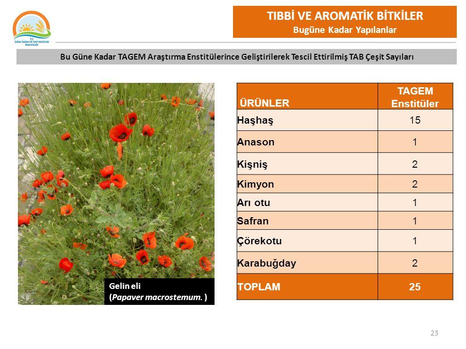 tibbi aromatik bitkiler ppt video