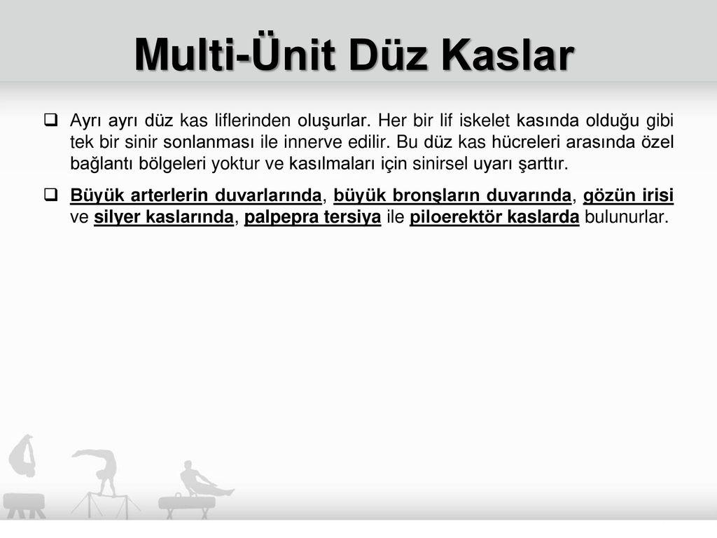 Kas Fizyolojisi Doç. Dr. Hakan Öztürk. - ppt indir