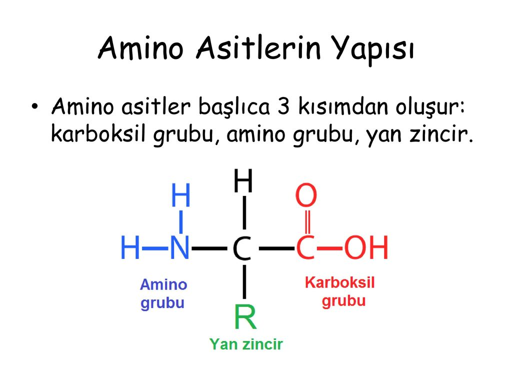 Amino asitler nedir