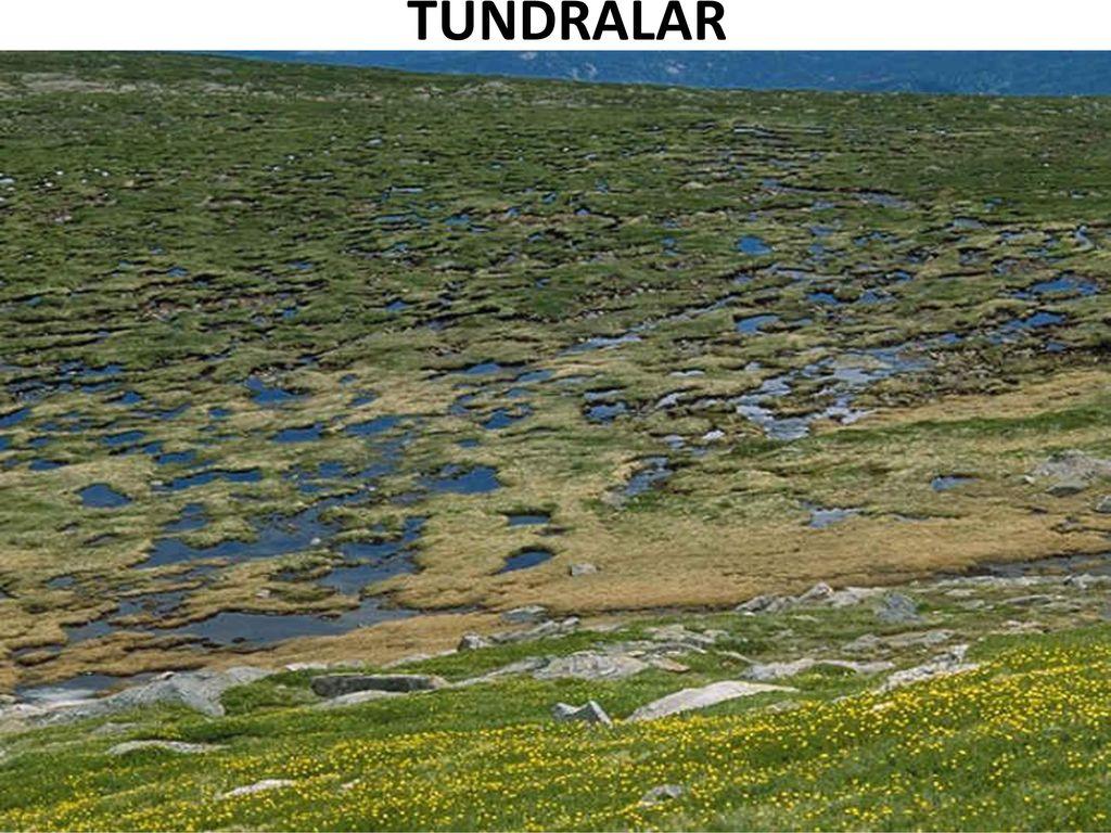 Tundra, doğal bir zon. Kısa Açıklama